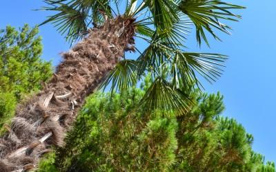 Palm in de tuin