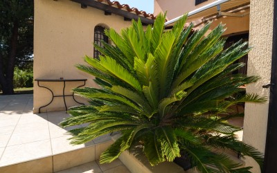 Terras planten 2